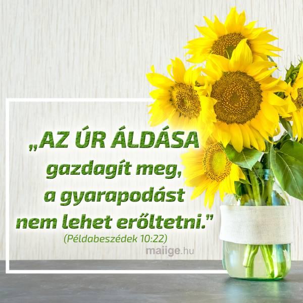 """""""Az ÚR áldása gazdagít meg, a gyarapodást nem lehet erőltetni."""" (Példabeszédek 10:22)"""