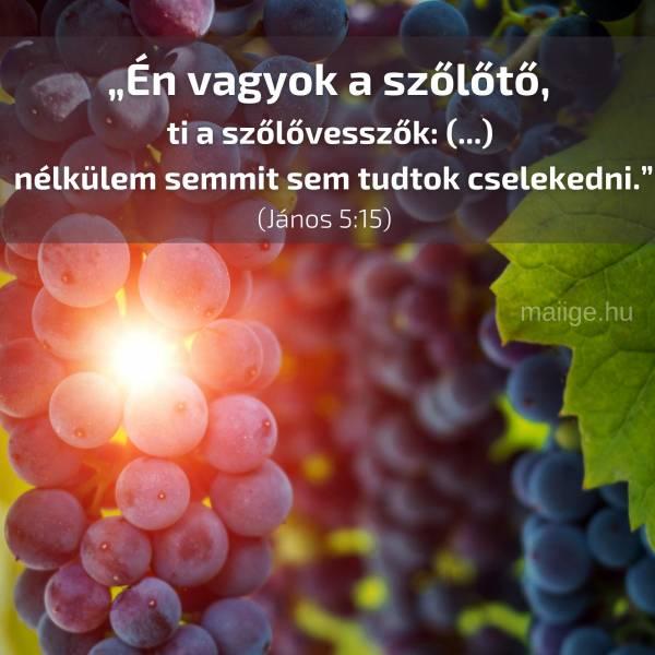 """""""Én vagyok a szőlőtő, ti a szőlővesszők: (...) nélkülem semmit sem tudtok cselekedni."""" (János 5:15)"""